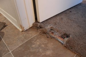 Carpet Repair Services In Huntsville Al